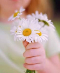 maggie daisy